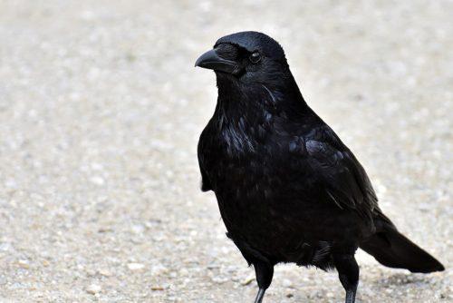 Michael E bird